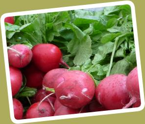 MorgiewiczRadishes